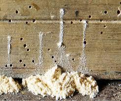 woodworm treatments suffolk